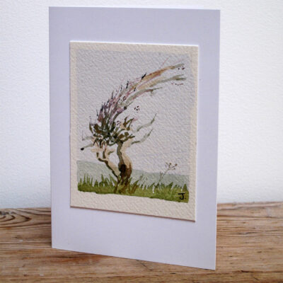 Hawthorn Bush - Original Watercolour Painting by Jessica Coote